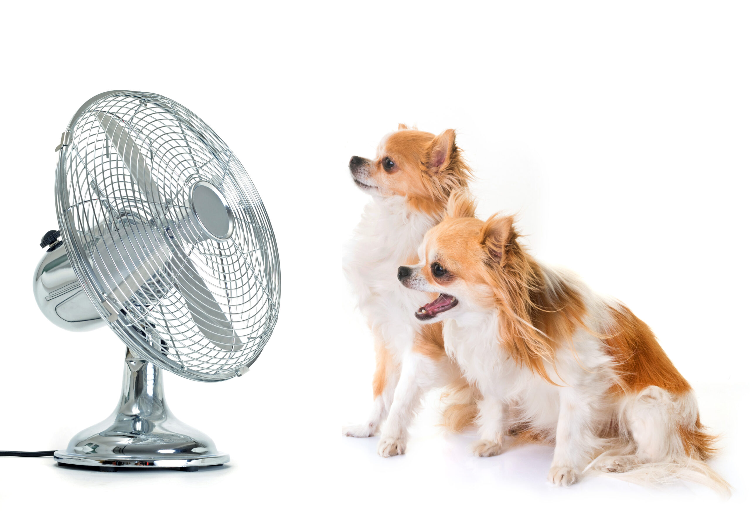 Climatizzatore o ventilatore? Guida alla scelta
